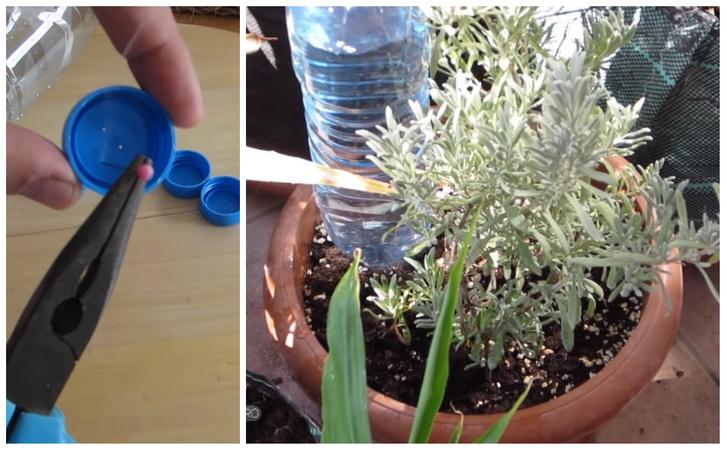 Фото №3 - 8 спасительных лайфхаков для комнатных растений