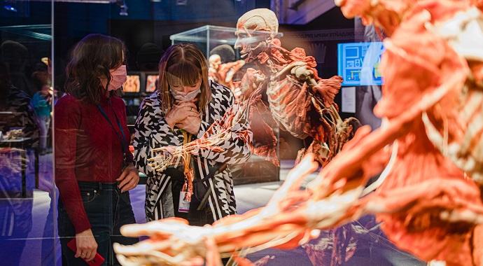 Выставка «BODY WORLDS. Мир тела» примет участие во Всероссийской акции «Ночь музеев»