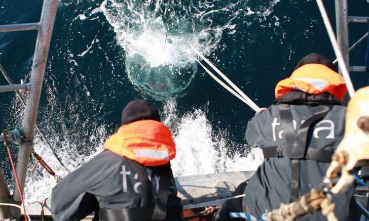 Фото №1 - Подсчитано количество вирусов в Мировом океане