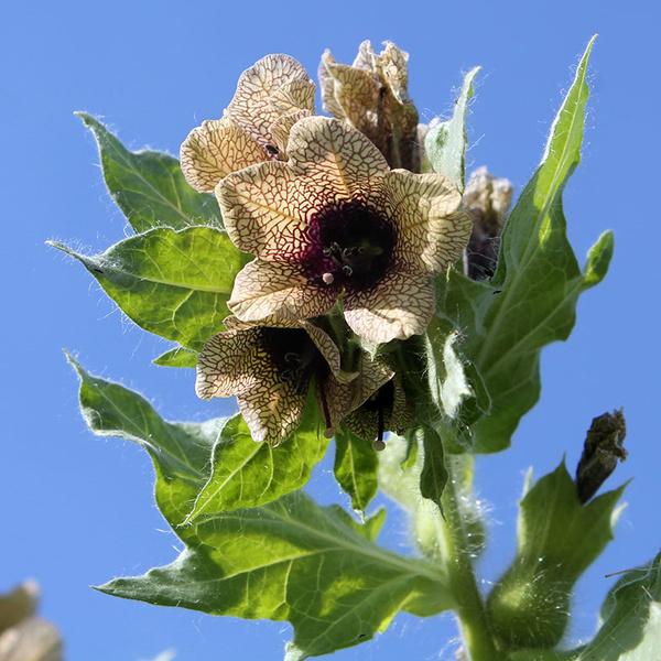 Фото №4 - Опасная ботаника: от каких растений стоит держаться подальше
