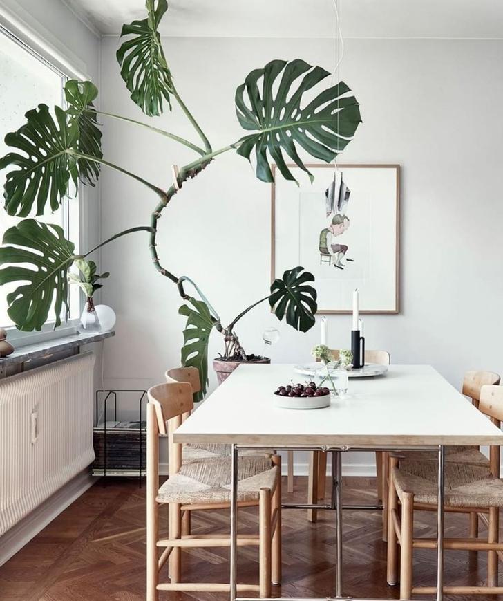 Фото №5 - Растения в интерьере: 7 идей для домашнего сада