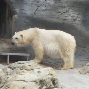 Фото №1 - Умерла самая старая медведица
