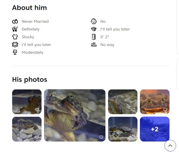 Фото №2 - Самой одинокой в мире лягушке нашли пару