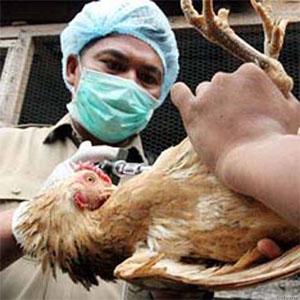 Фото №1 - Птичий грипп - орудие коммунизма