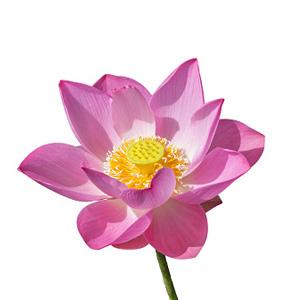 Фото №6 - Тест: Выбери цветок, и мы скажем, какая ты на самом деле