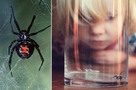 Если ребенка укусил маленький паук