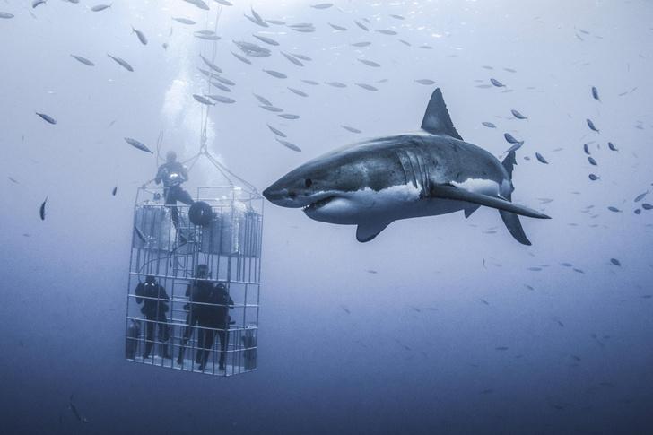 Фото №1 - Знакомство под водой