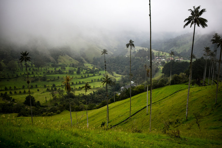 Фото №5 - Маршрут на день: хайкинг в колумбийской долине Кокора