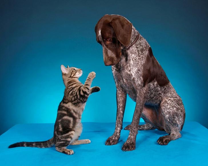 Фото №1 - Ученые сравнили мозг кошек и собак