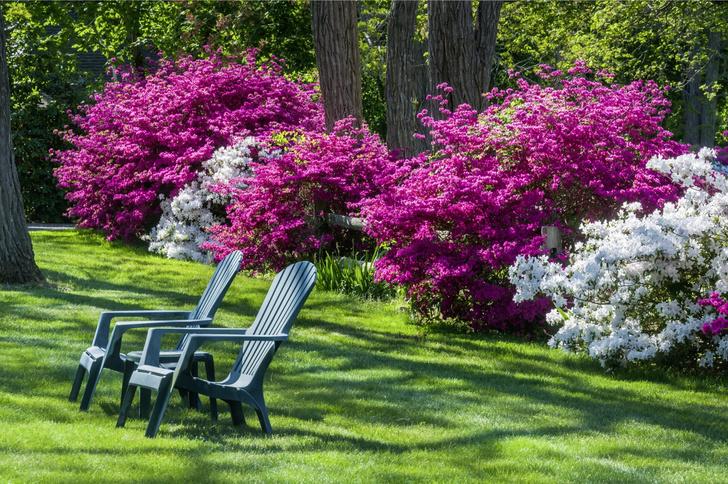 Фото №4 - Типичные ошибки в саду: советы дизайнеров