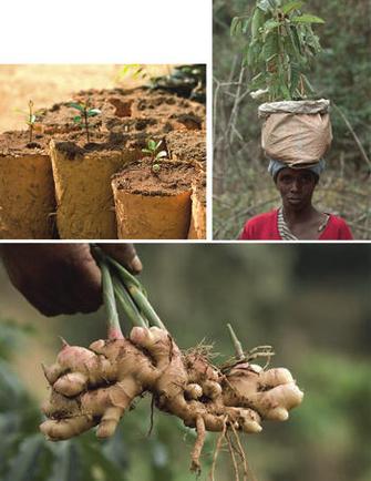 Сажать деревья, поддерживать местное население, использовать уникальные природные ингредиенты – программа Chanel на Мадагаскаре продолжается уже не первый год.