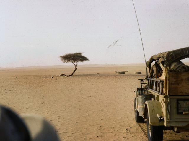 Фото №6 - Вернуться к корням: 7 самых экзотичных деревьев в мире