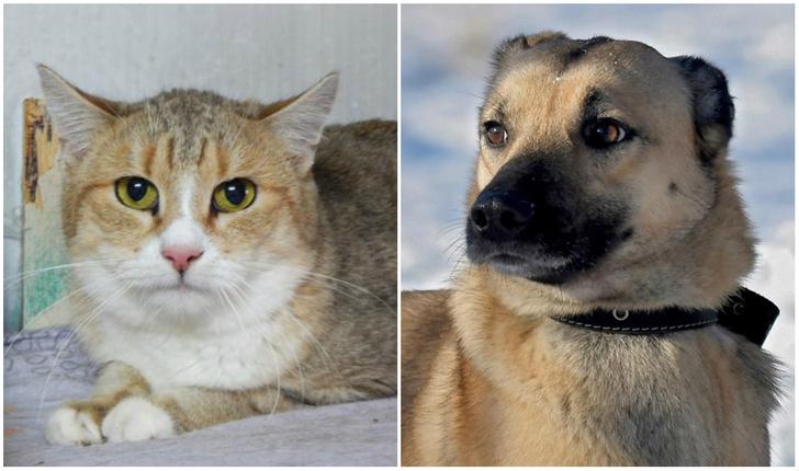 Фото №1 - Котопёс на карантине: кот Шницель и собака Веточка ждут своих людей