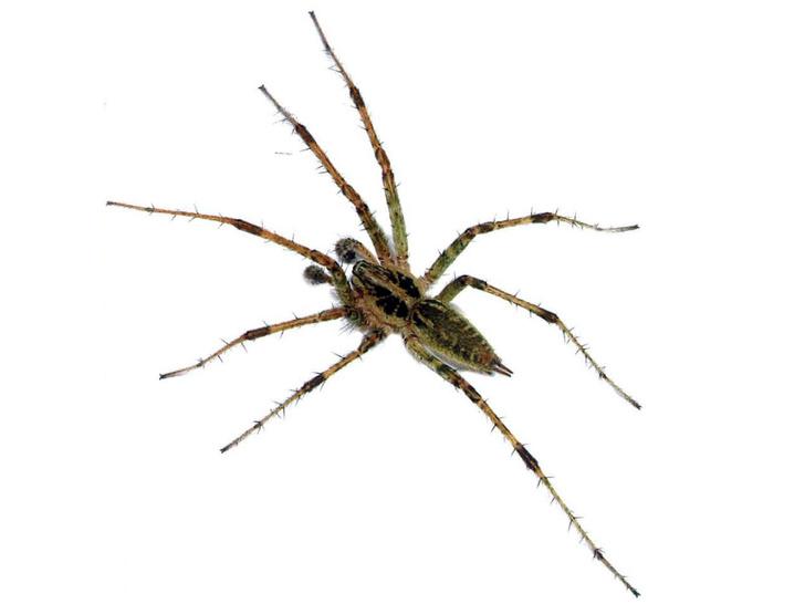 Фото №1 - В Приморье обнаружили пять новых для России видов пауков