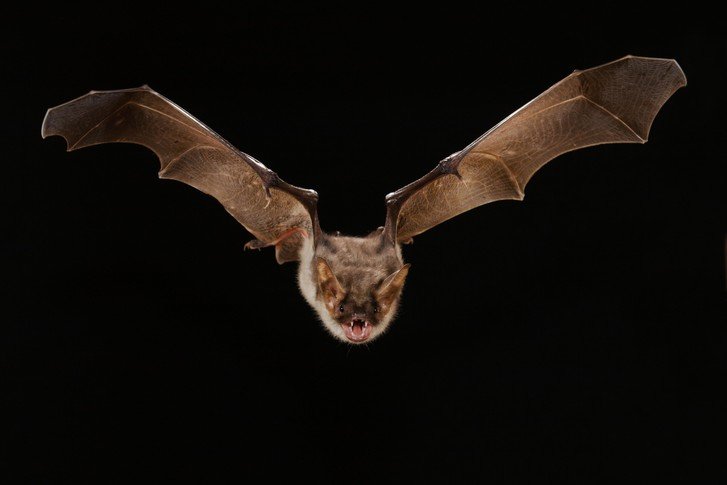 Фото №1 - Мешают ли радары летучим мышам?