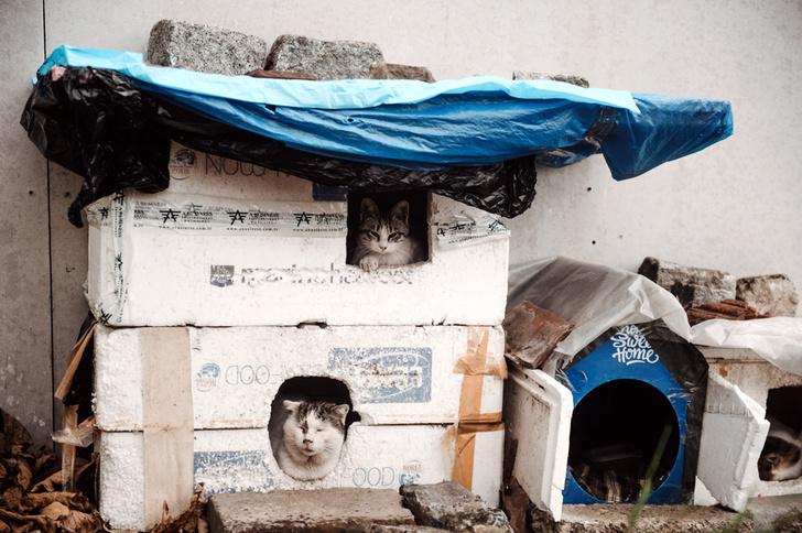 Фото №7 - Короли улиц: настоящие хозяева Стамбула