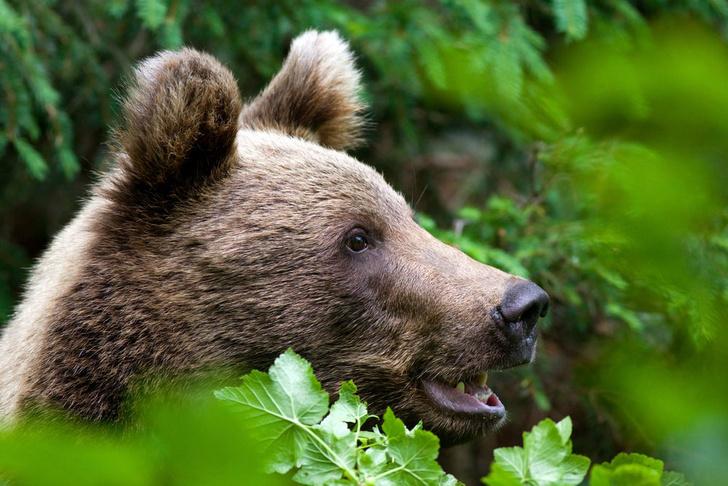 Фото №1 - Почему при испуге случается «медвежья болезнь»?