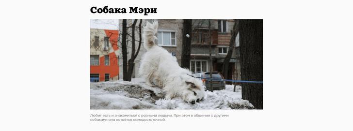 Фото №2 - Сайт дня: Интернет-журнал о домашних животных и их историях
