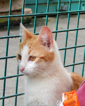 Фото №2 - Котопёс недели: кошка Мэгги и хаски Зима