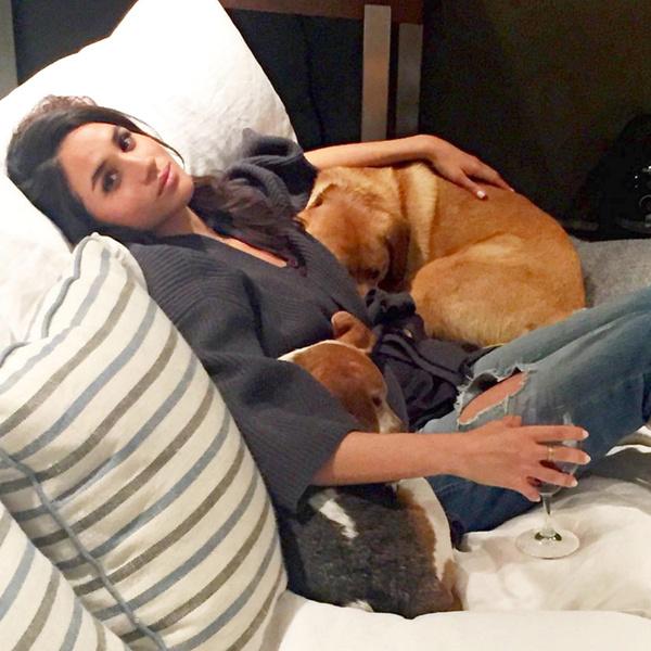 Фото №2 - Доброе сердце: Меган Маркл, Джордж Клуни и другие звезды, взявшие собаку из приюта