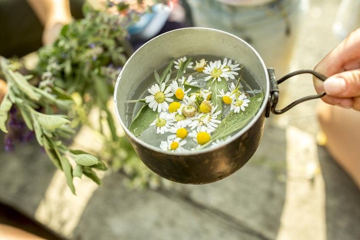 Фото №1 - Ромашка против простуды: 5 эффективных рецептов