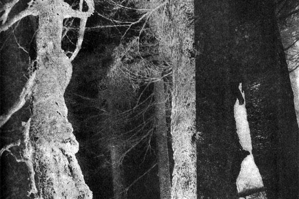 Фото №1 - Лесные страхи