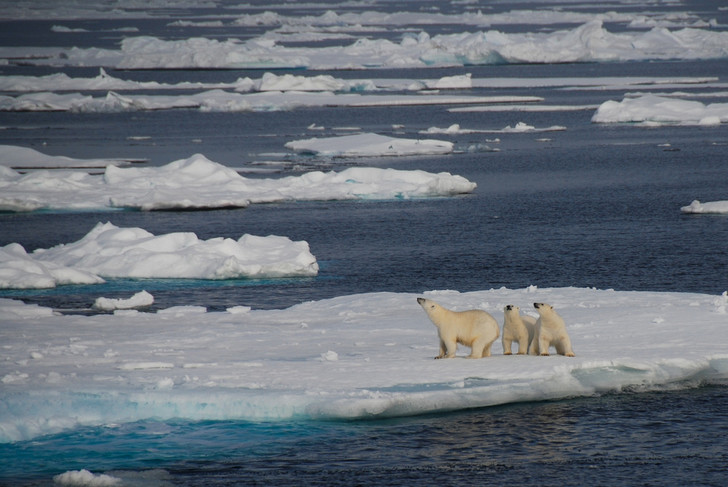 Фото №1 - Площадь льдов Арктики достигла рекордного минимума