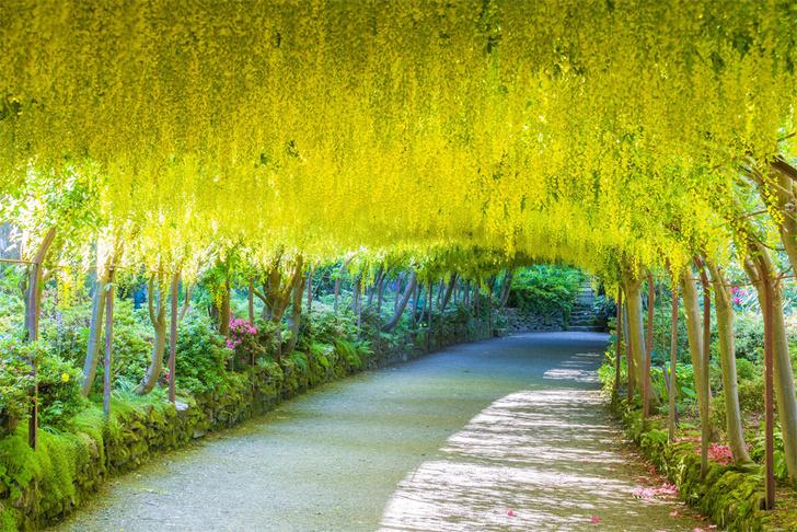 Фото №3 - MAXIM рецензирует «Таинственный сад»