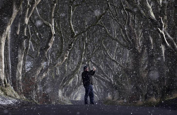 Фото №1 - Место дня. Аллея Дарк-Хеджес (Ирландия)