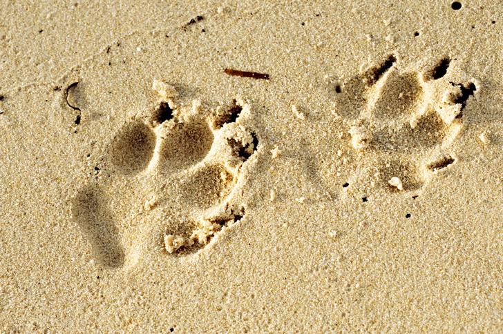 Фото №5 - Собаки с волчьим билетом
