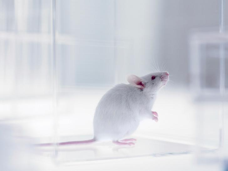 Фото №1 - Ученые приблизились к созданию «лекарства» от облысения и седины