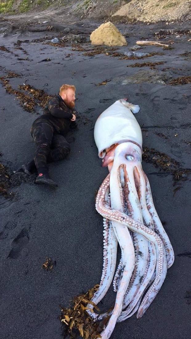 Фото №1 - В Новой Зеландии на берег выбросило гигантского кальмара