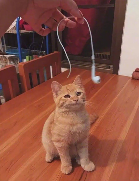 Фото №8 - Ни капли раскаяния: 30 страшных кошачьих преступлений— фото