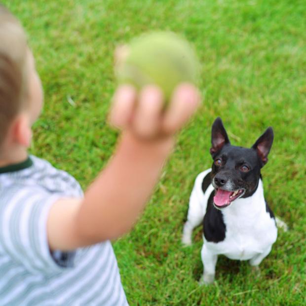 Фото №2 - 5 опасных заблуждений о дружбе ребенка и собаки