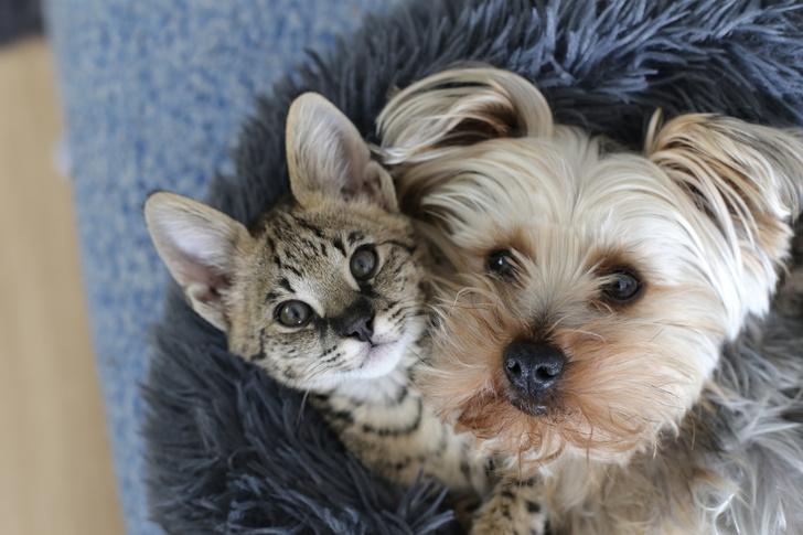 Фото №1 - 20 собак, которые решили, что они— кошки: фото