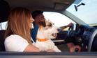 Собака помогла девушке со страшным диагнозом найти любовь