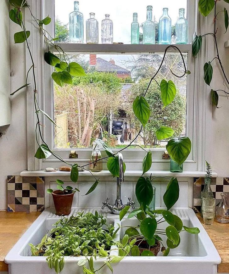 Фото №2 - Всё об увлажнении растений: советы эксперта