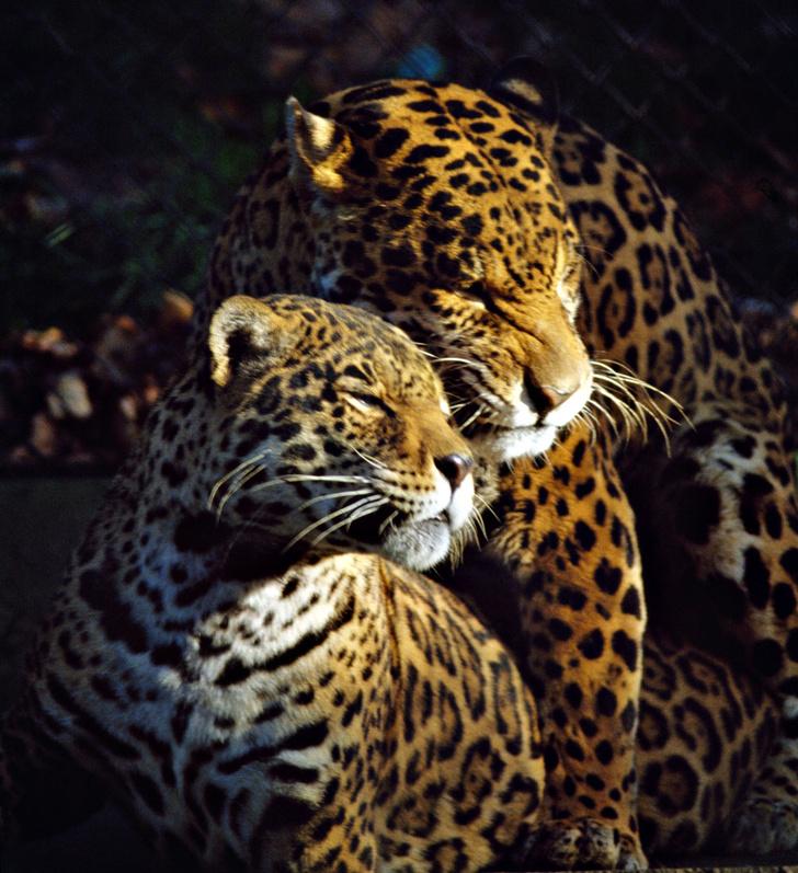 Фото №8 - Детки вне клетки: 12 лучших зоопарков мира