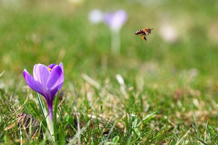 Фото №4 - Жизненно важное ж-ж-ж: интересные факты о пользе и важности пчел
