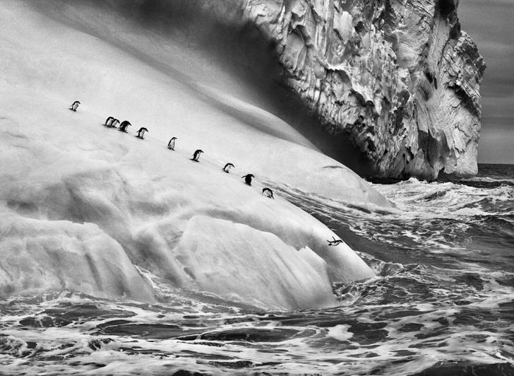 Фото №6 - Фотогалерея: Экспедиция вокруг Земли с Себастио Сальгадо