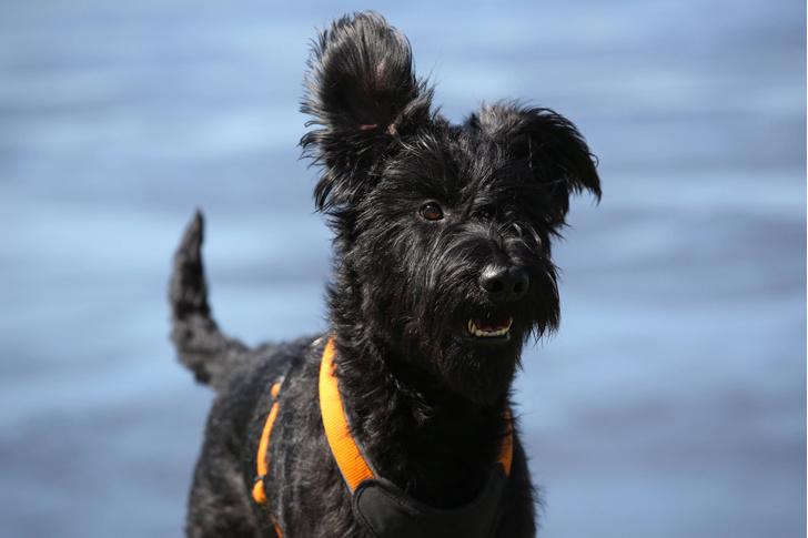 Фото №1 - Собаки слушают людей гораздо внимательнее, чем принято считать