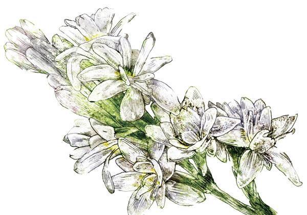 Фото №1 - Первозданные ароматы
