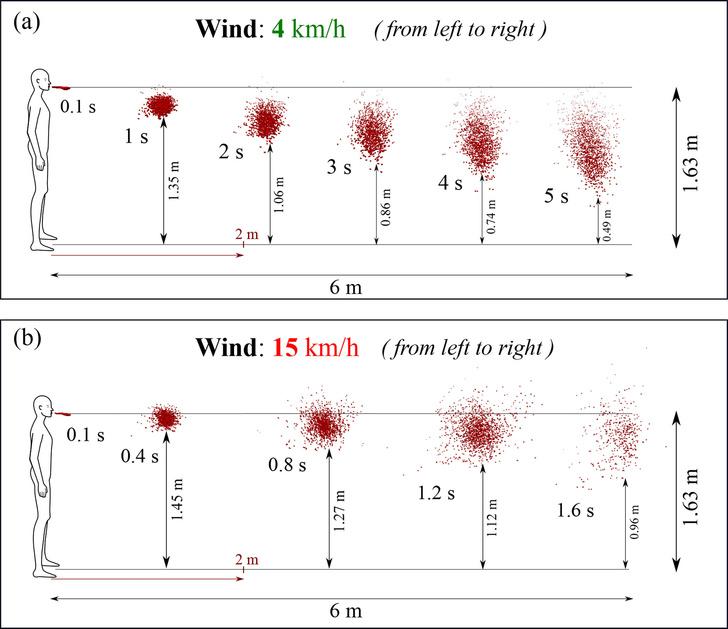 Фото №1 - Ученые оценили, как ветер разносит коронавирус