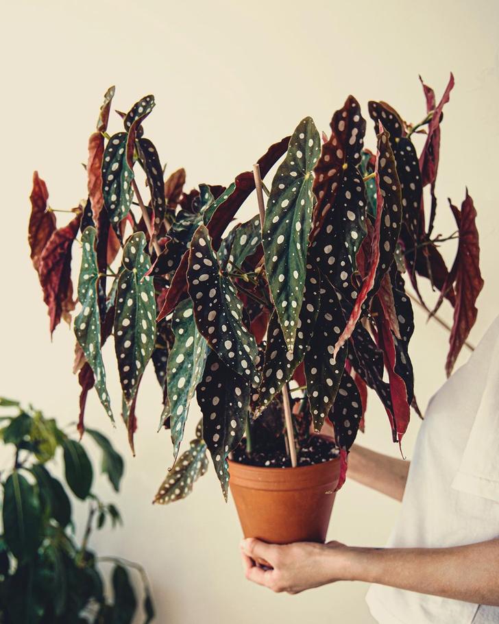 Фото №7 - Тренды 2020: самые модные комнатные растения