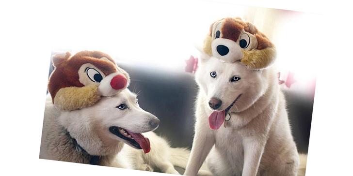 Фото №8 - 20 очаровательных собак в костюмчиках по мотивам мультфильмов Disney