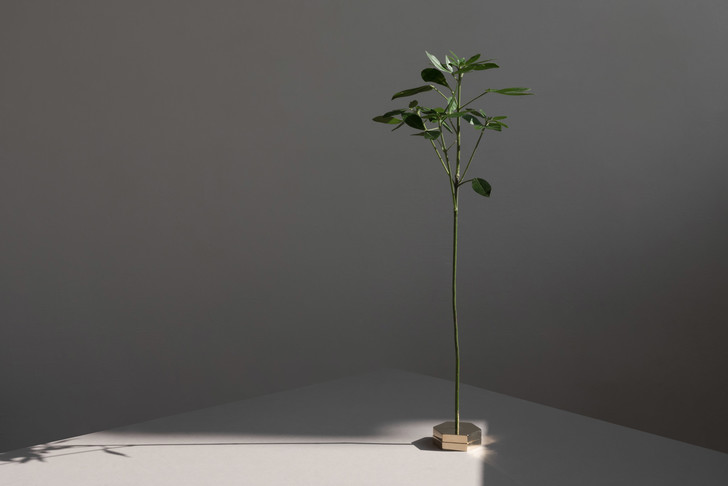Фото №2 - No Vases: вазы без ваз