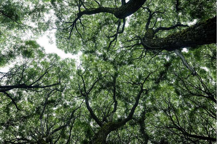 Фото №10 - Здравствуй, дерево! Тайная жизнь растений
