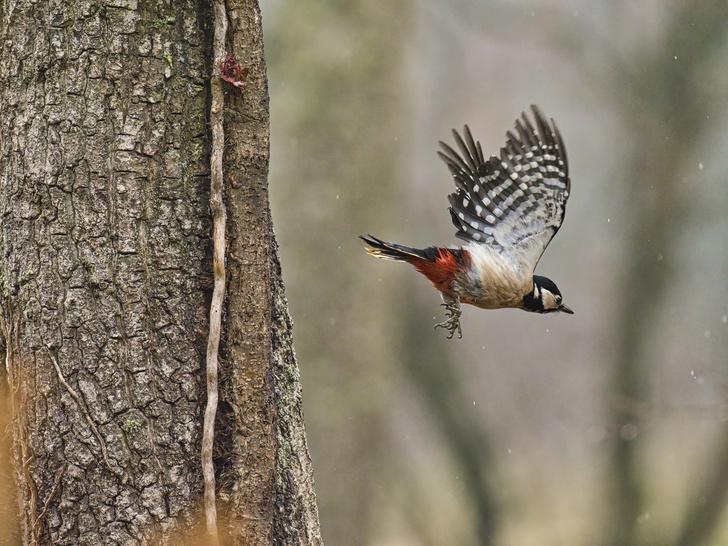 Фото №4 - По ком стучит дятел: 6 занимательных фактов о лесных птицах
