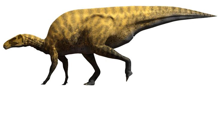 Фото №1 - В Испании обнаружили новый вид динозавров