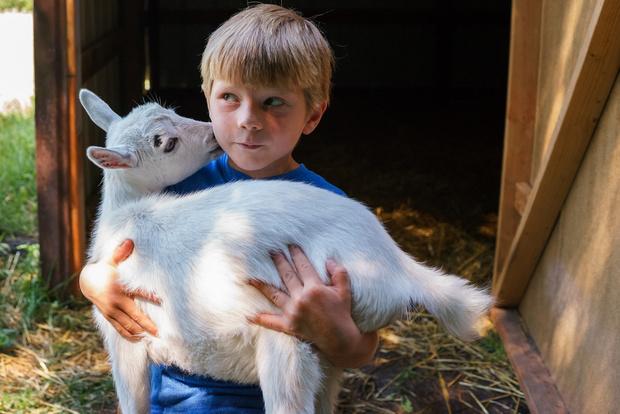 Фото №1 - Козье молоко: чем оно лучше для ребенка